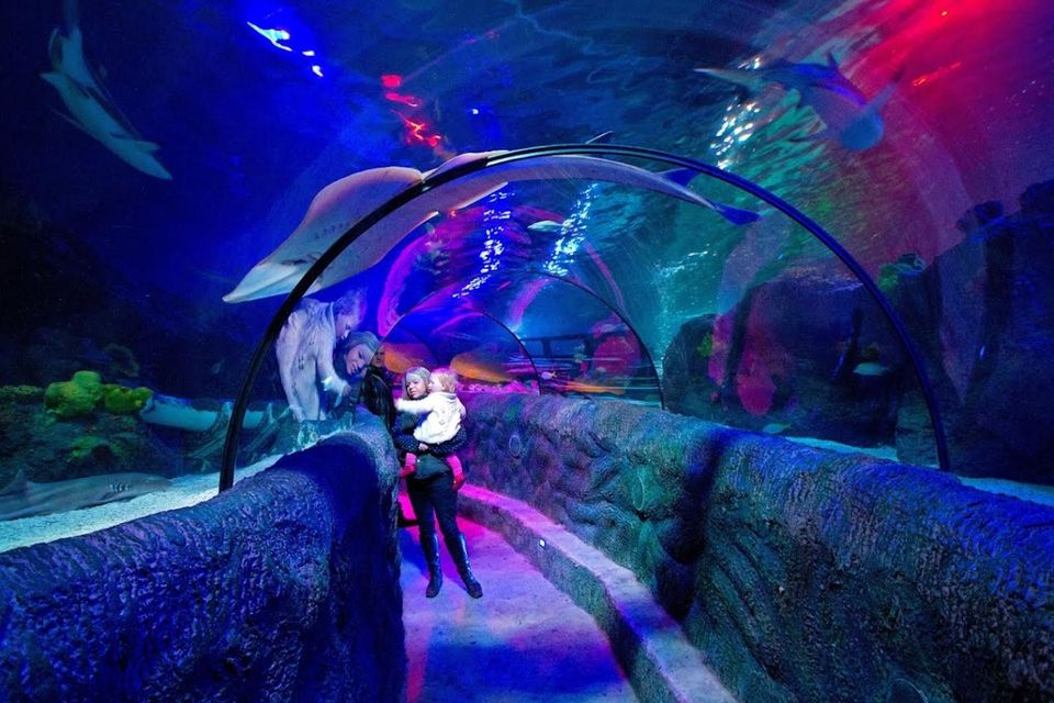 Glass Tunnel at SEA LIFE Loch Lomond